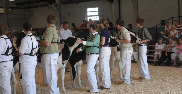 4-hers showing dairy cows