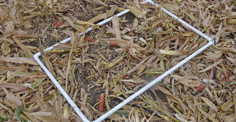 2.5-by-4-foot rectangle made from PVC pipe lying in harvested cornfield