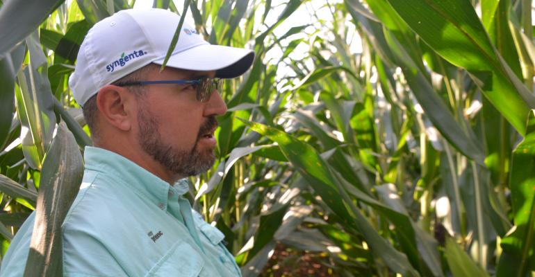 Craig Austin, an agronomist with Syngenta, walks the Grow More Experience plot looking for disease and weed issues