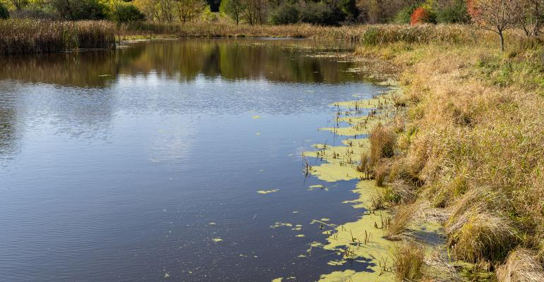 algae and pond scum on the surface of a small pond