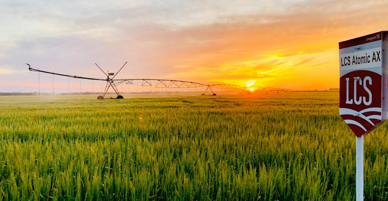 Sunset and irrigation equipment in field