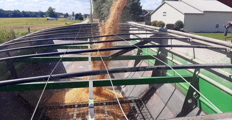 Corn dumping from combine auger into grain cart.