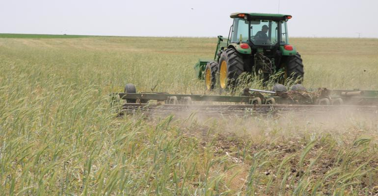 tractor pulling roller harrow in cereal rye cover crop