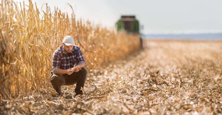 Young farmer checking field during harvest with combine in background.