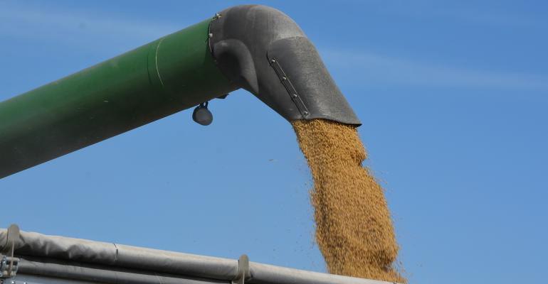 soybeans being loaded into cart