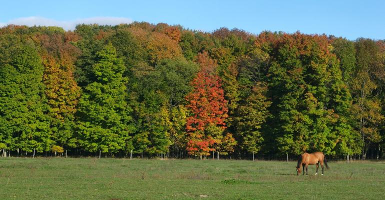 horse in pasture at fall time with trees changing color