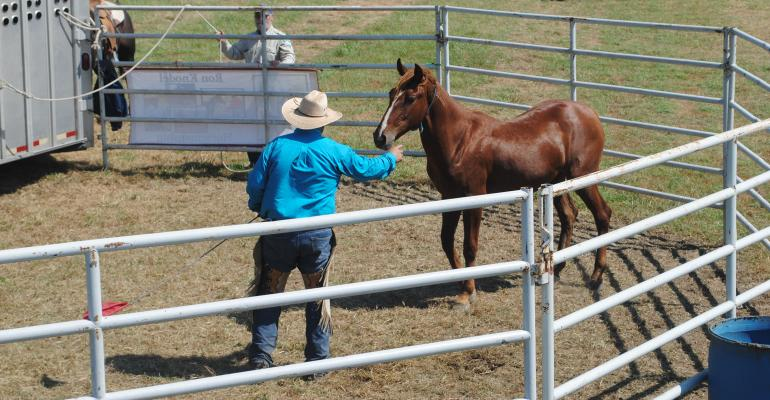 Ron Knodel's wild horse gentling sessions and the BLM booth are near Syngenta Square,