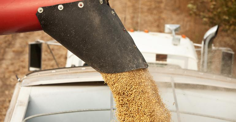 auger unloading soybeans into semi truck