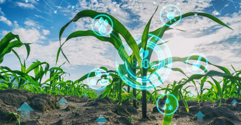 Close up of corn plants in field with technology icons