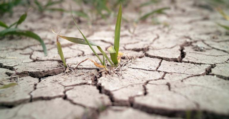 Wheat grass growing through cracks in the ground