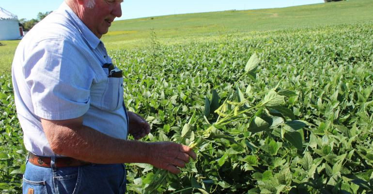 Keith Dennis holding soybean plant