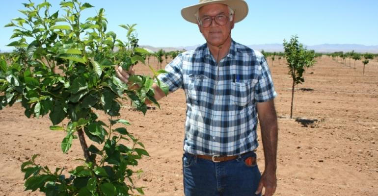 First red tart cherry planting takes root in Arizona