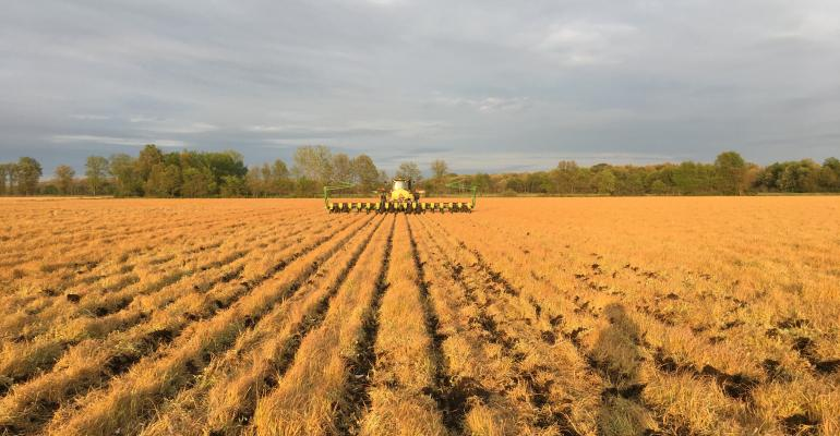 corn planted in covers.