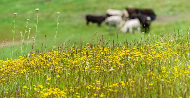 Wildflowers blooming in meadow with blurred cattle grazing in the background