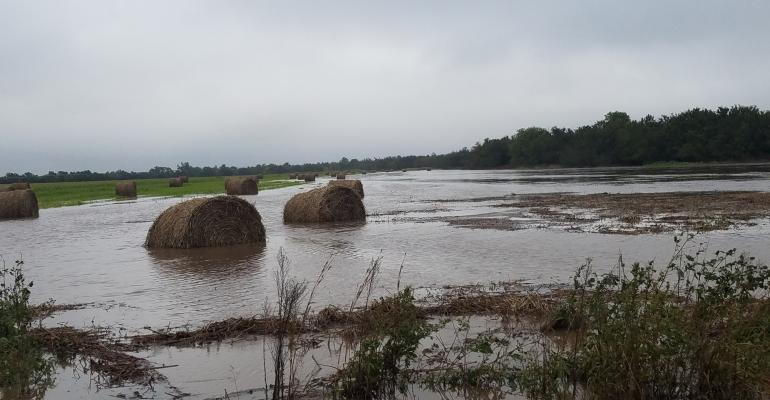 Flooding on the Medicine River in Barber County left this field of big round bales half-submerged