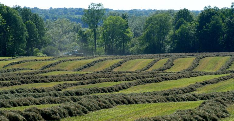 Scenic view of alfalfa fields being cut