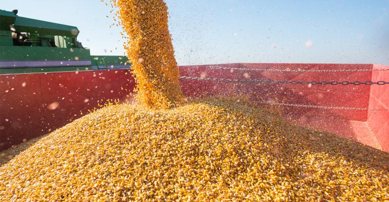 Pouring corn into tractor trailer