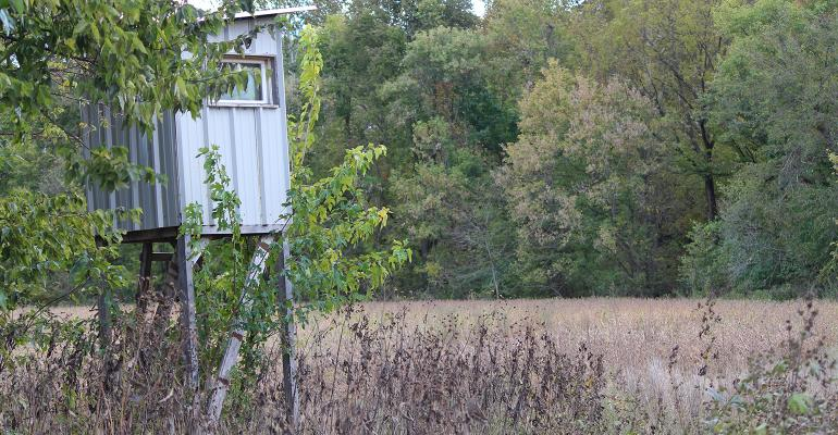 Deer stand in the trees