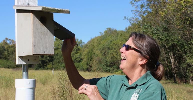 Krista Magaw peeks at the nest in a bluebird nesting box