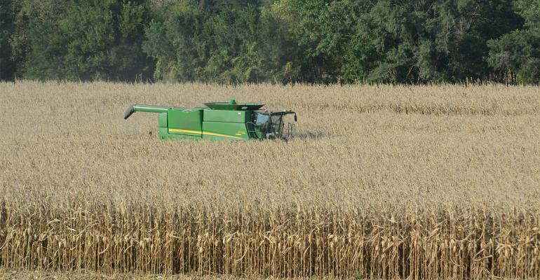 combine in mature corn field