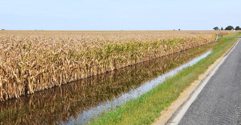 Flood water fills ditches along rural road and ready-to-harvest corn field