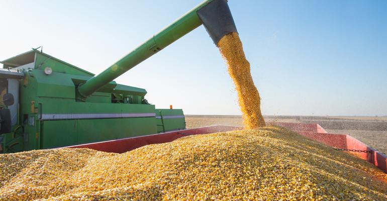 auger loading corn into grain cart
