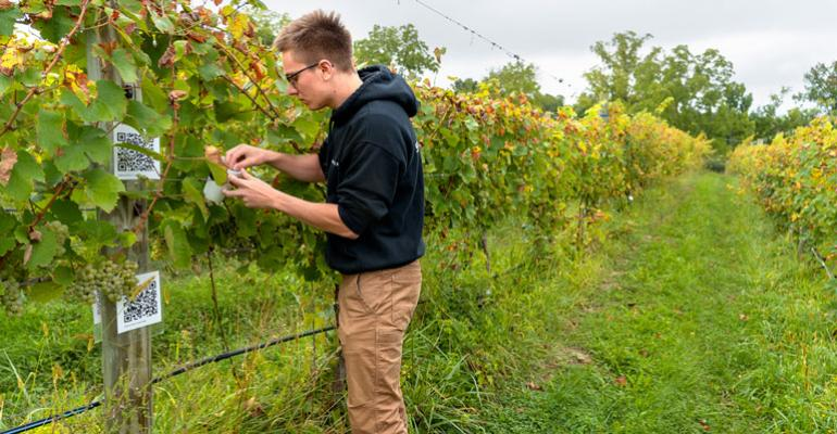 Hunter Adams deploys Monarch micro-satellites at the Cornell teaching vineyard in Lansing