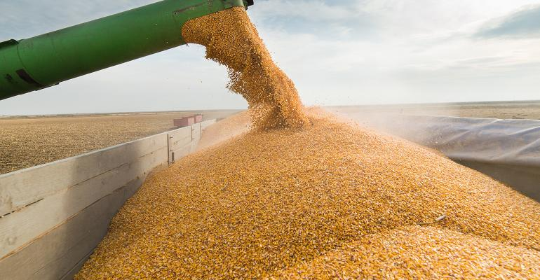 loading truck with corn