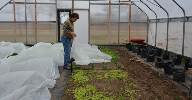 Carolyn McGinn with her high tunnel lettuce crop
