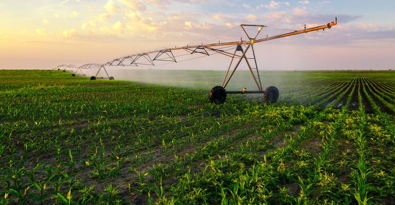 irrigation system watering corn field