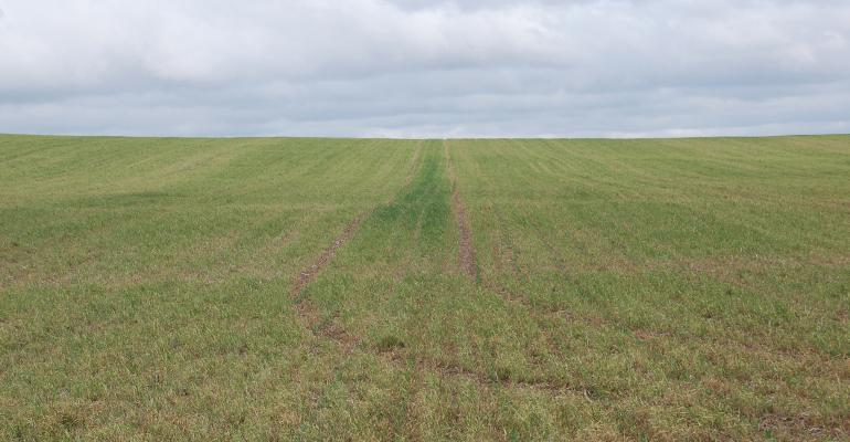cover crops in field