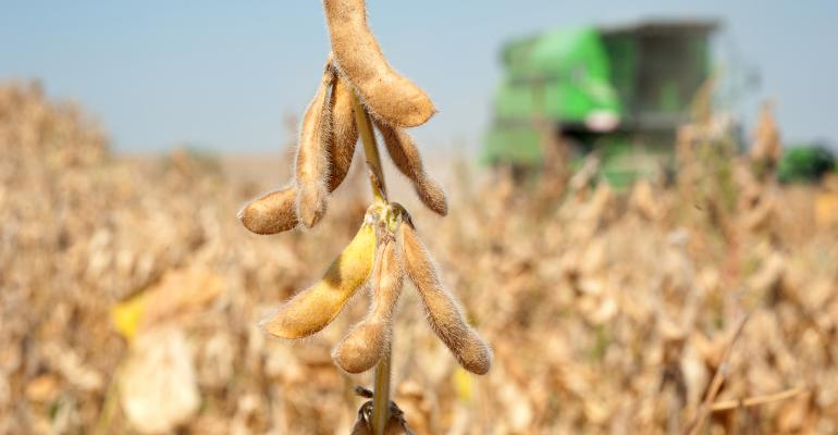 soybean pod closeup