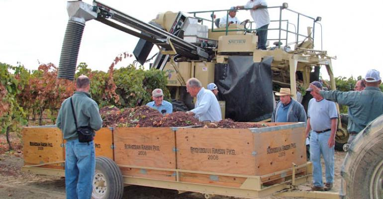 Record raisin price after costly decade