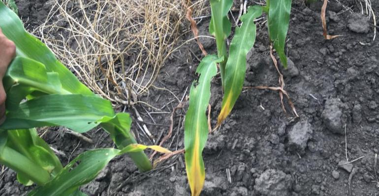 4.23 Corn-nitrogen-efficiency-h