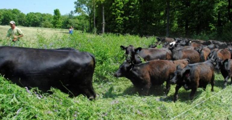 5.30 cows grazing on cover crops Penn state