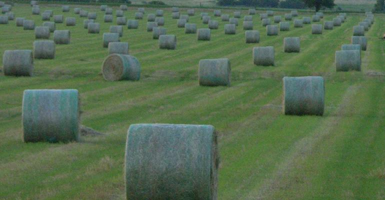 Round bales in a meadow.