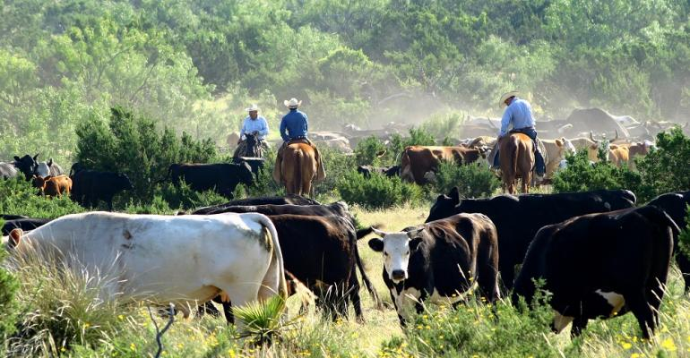 cowboys horseback with cattle