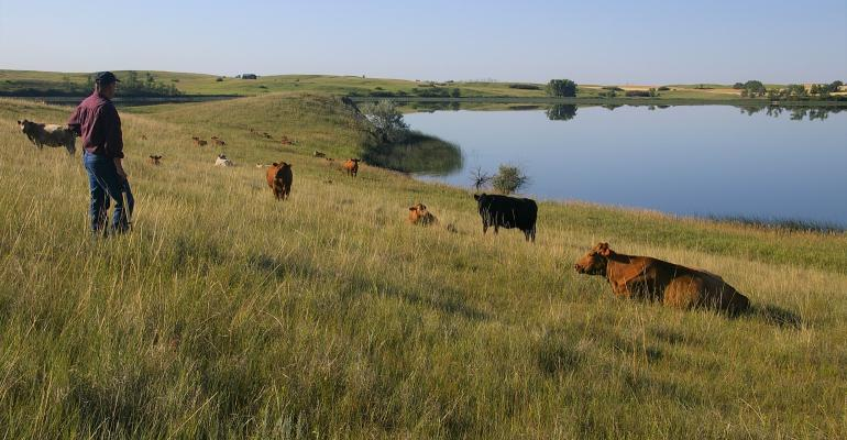 Gene Goven with cows