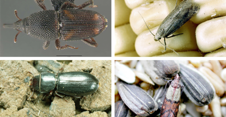 9.26b grain storage insects