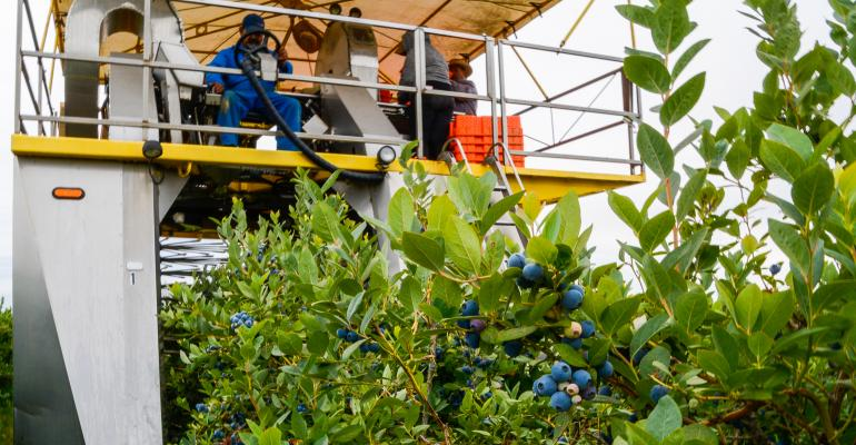 Mechanical blueberry harvester