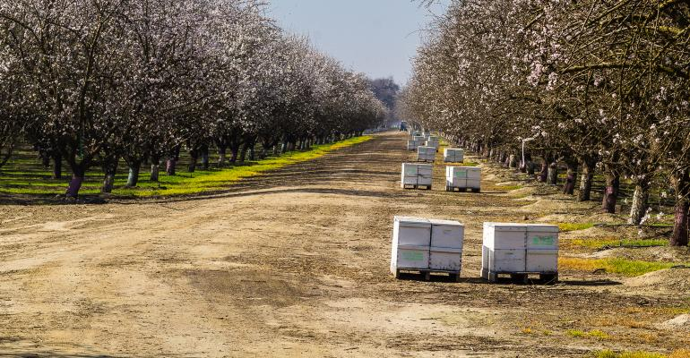 Bee hives in almonds
