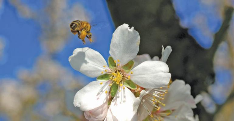 Honing in on bee colony collapse disorder