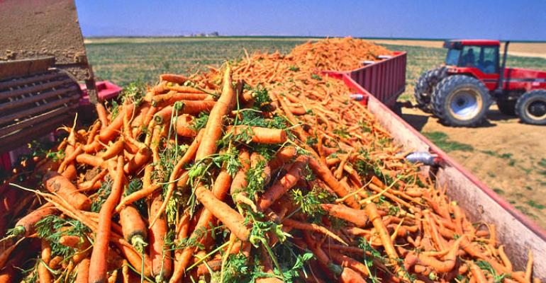 Foliar diseases of carrots