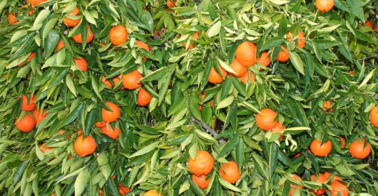 Citrus genome sequencing could help block citrus greening