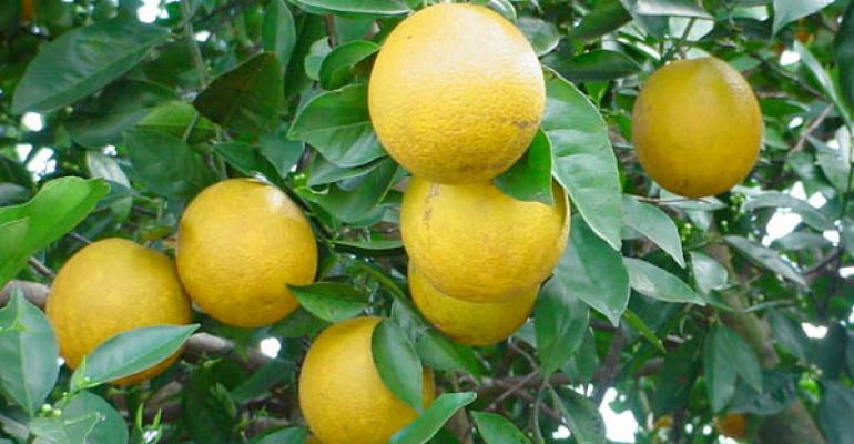 Applying nitrogen to citrus at the best time