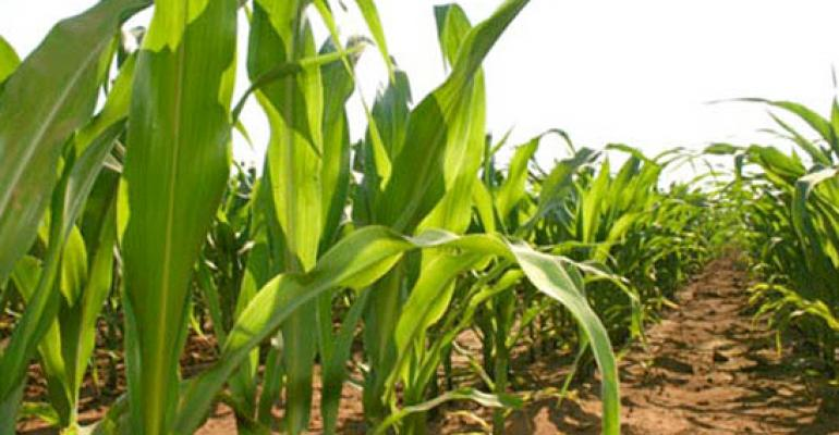 Grain leaders explore Chinese corn market