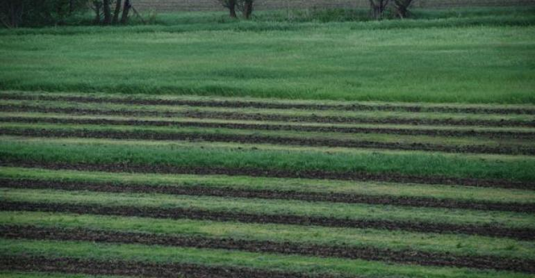 Conservation strips with grass and organic corn anchors soil and is another way to stripintercrop Some are experimenting with highvalue crops