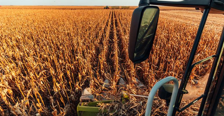 Harvesting corn field - shot from above and slightly behind the cab