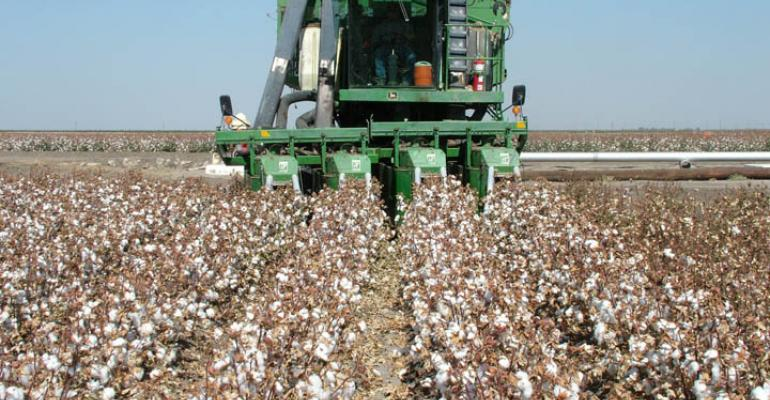 Do your homework before choosing cotton varieties