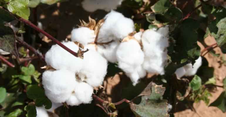 2010 Arizona cotton forecast at 605,000 bales